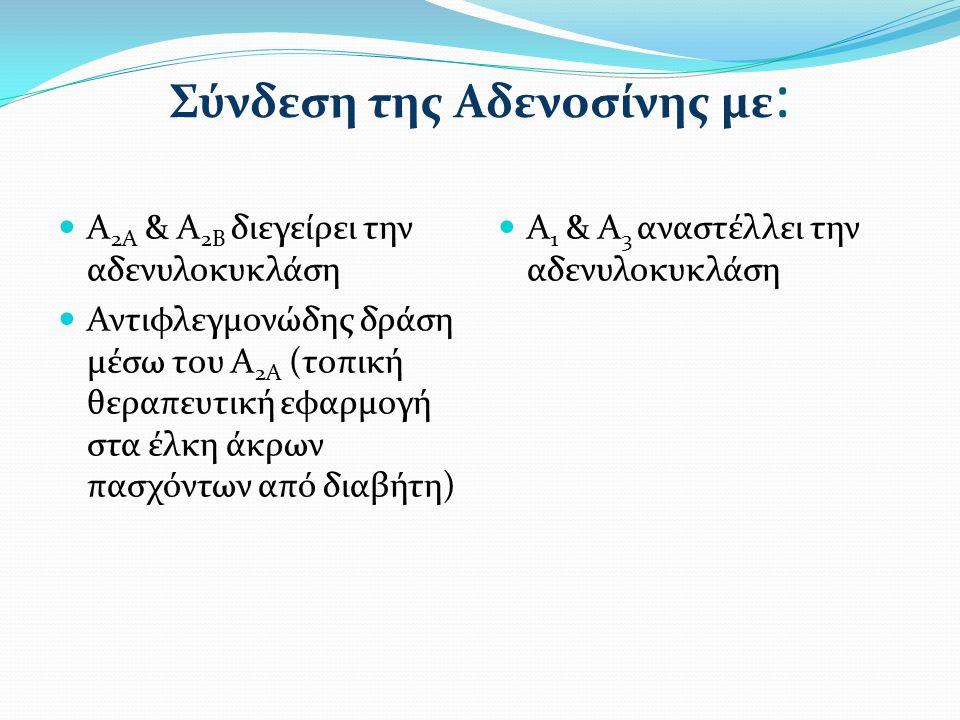 Σύνδεση της Αδενοσίνης με : Α 2Α & Α 2Β διεγείρει την αδενυλοκυκλάση Αντιφλεγμονώδης δράση μέσω του Α 2Α (τοπική θεραπευτική εφαρμογή στα έλκη άκρων π