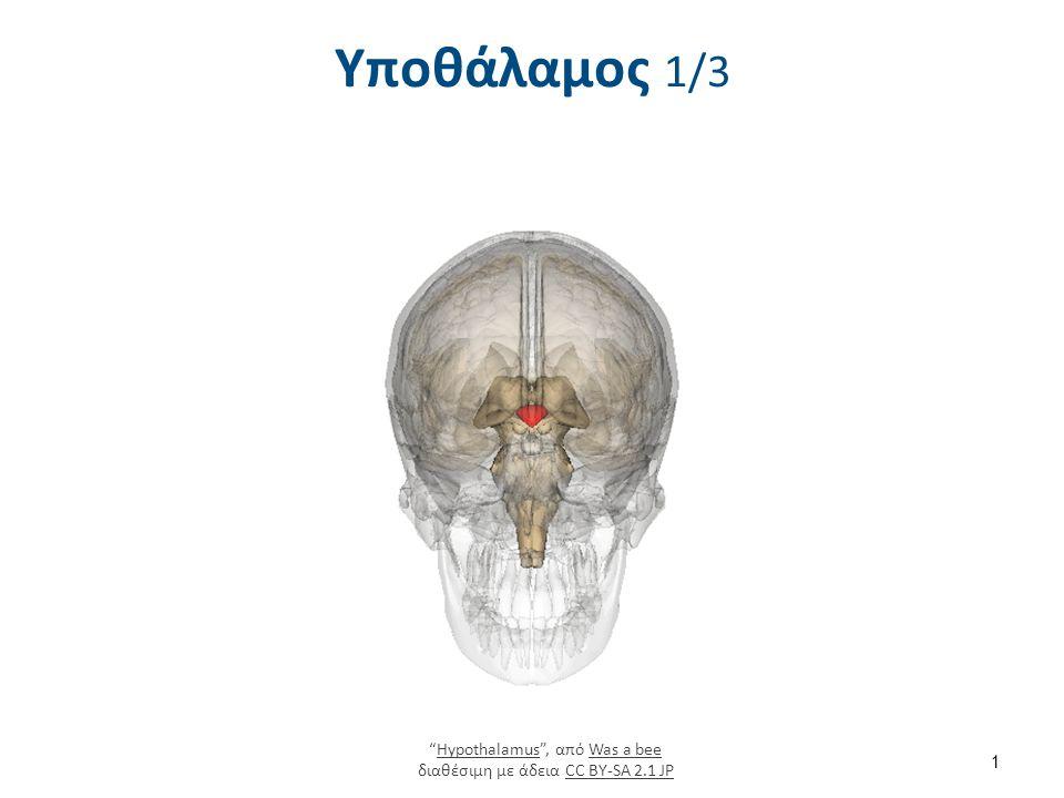 """Υποθάλαμος 1/3 1 """"Hypothalamus"""", από Was a bee διαθέσιμη με άδεια CC BY-SA 2.1 JPHypothalamusWas a beeCC BY-SA 2.1 JP"""