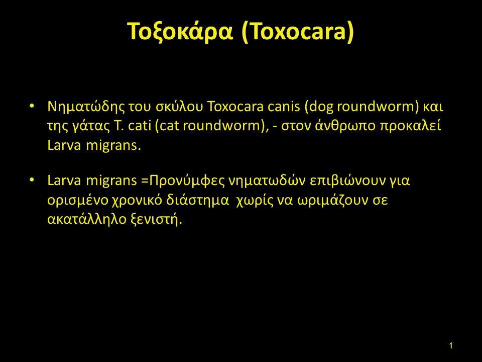 Τοξοκάρα (Toxocara) Νηματώδης του σκύλου Toxocara canis (dog roundworm) και της γάτας T. cati (cat roundworm), - στον άνθρωπο προκαλεί Larva migrans.