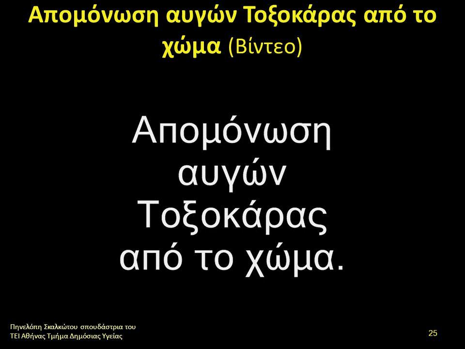 Απομόνωση αυγών Τοξοκάρας από το χώμα (Βίντεο) Πηνελόπη Σκαλκώτου σπουδάστρια του ΤΕΙ Αθήνας Τμήμα Δημόσιας Υγείας 25