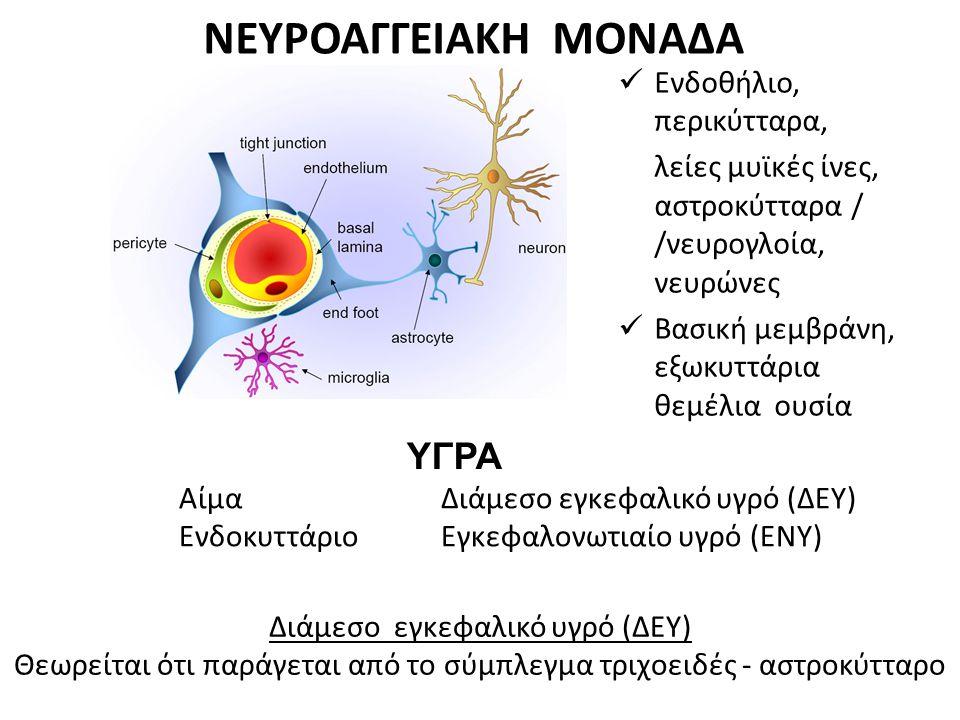 ΝΕΥΡΟΑΓΓΕΙΑΚΗ ΜΟΝΑΔΑ Ενδοθήλιο, περικύτταρα, λείες μυϊκές ίνες, αστροκύτταρα / /νευρογλοία, νευρώνες Βασική μεμβράνη, εξωκυττάρια θεμέλια ουσία Αίμα Ε