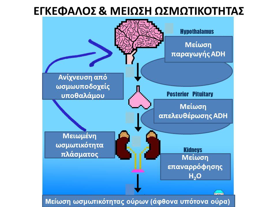 ΕΓΚΕΦΑΛΟΣ & ΜΕΙΩΣΗ ΩΣΜΩΤΙΚΟΤΗΤΑΣ Ανίχνευση από ωσμωυποδοχείς υποθαλάμου Μειωμένη ωσμωτικότητα πλάσματος Μείωση επαναρρόφησης Η 2 Ο Μείωση απελευθέρωση