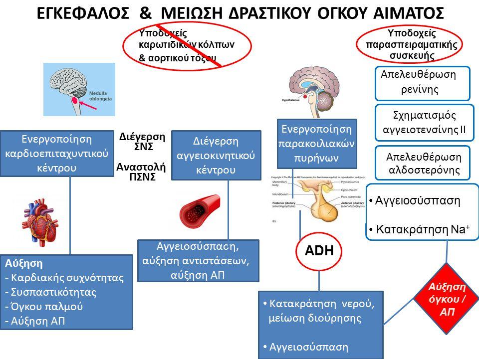 ΕΓΚΕΦΑΛΟΣ & ΜΕΙΩΣΗ ΔΡΑΣΤΙΚΟΥ ΟΓΚΟΥ ΑΙΜΑΤΟΣ Υποδοχείς παρασπειραματικής συσκευής Απελευθέρωση ρενίνης Σχηματισμός αγγειοτενσίνης ΙΙ Απελευθέρωση αλδοστ