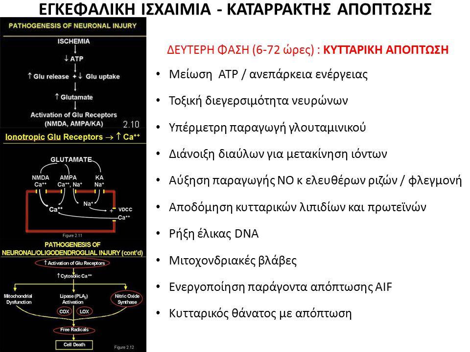 ΕΓΚΕΦΑΛΙΚΗ ΙΣΧΑΙΜΙΑ - ΚΑΤΑΡΡΑΚΤΗΣ ΑΠΟΠΤΩΣΗΣ ΔΕΥΤΕΡΗ ΦΑΣΗ (6-72 ώρες) : ΚΥΤΤΑΡΙΚΗ ΑΠΟΠΤΩΣΗ Μείωση ΑΤΡ / ανεπάρκεια ενέργειας Τοξική διεγερσιμότητα νευρ