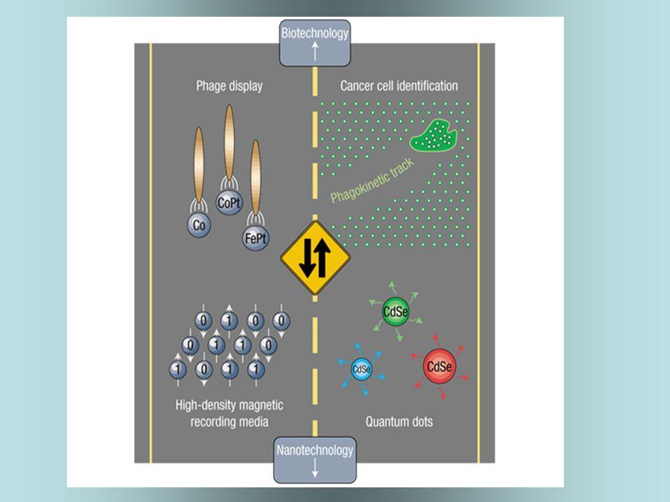 Ιατρική και βιοτεχνολογία Mέγεθος νανοσωματιδίων παρόμοιο με τα βασικά μοριακά δομικά στοιχεία.