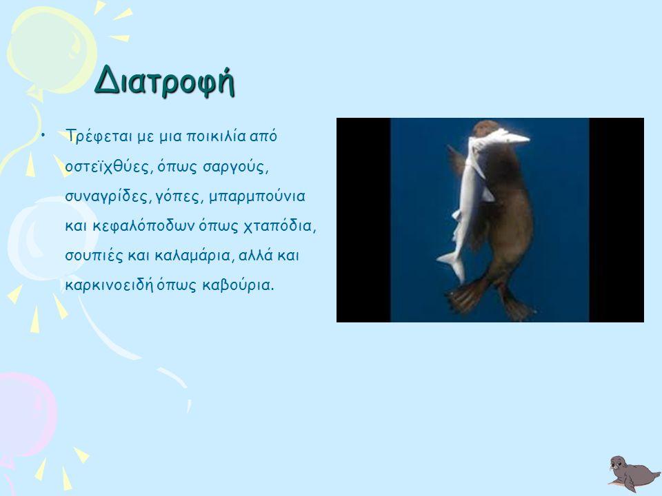 Κάποτε η μεσογειακή φώκια ήταν εξαπλωμένη από τις ακτές της Μεσογείου και της Μαύρης Θάλασσας έως την βορειοδυτική ακτή της Αφρικής στον Ατλαντικό, μέχρι και τις Αζόρες.