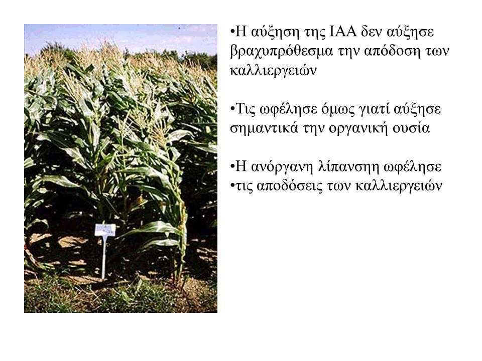 Η αύξηση της ΙΑΑ δεν αύξησε βραχυπρόθεσμα την απόδοση των καλλιεργειών Τις ωφέλησε όμως γιατί αύξησε σημαντικά την οργανική ουσία Η ανόργανη λίπανσηη ωφέλησε τις αποδόσεις των καλλιεργειών
