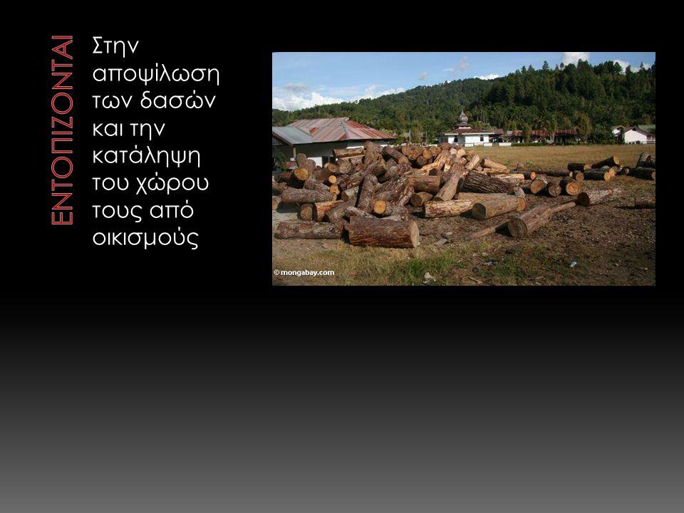 Στην αποψίλωση των δασών και την κατάληψη του χώρου τους από οικισμούς