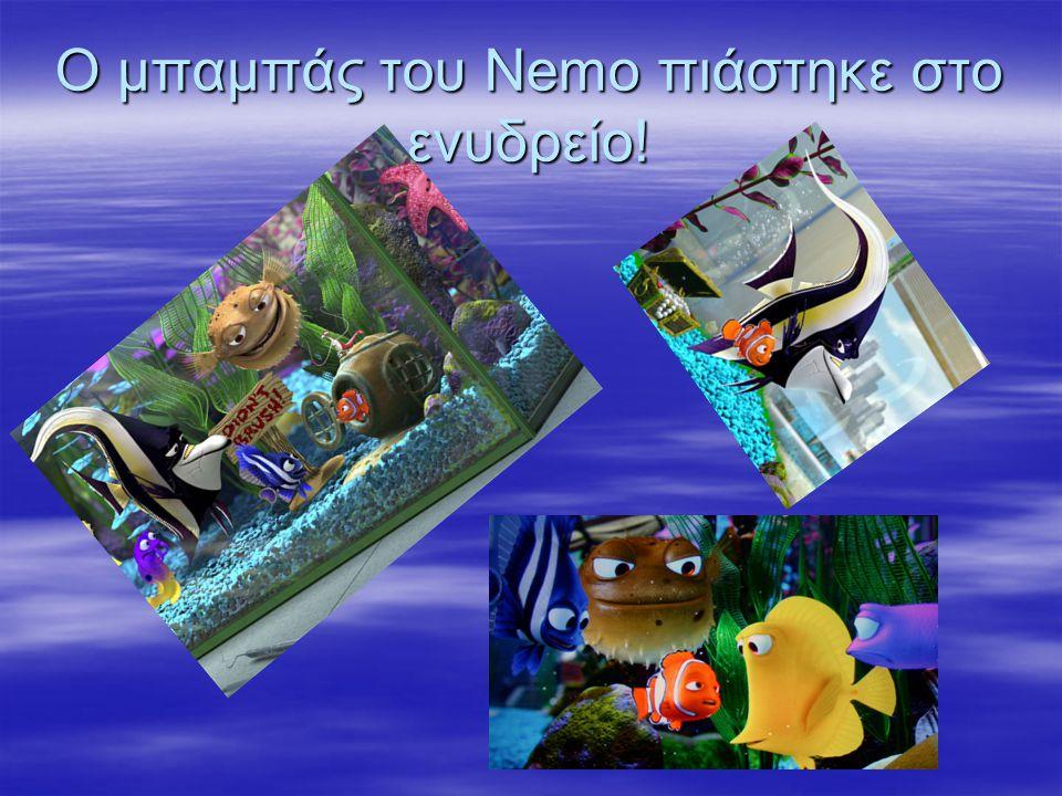 Ο μπαμπάς του Nemo πιάστηκε στο ενυδρείο!