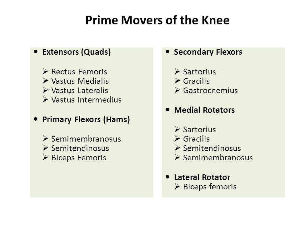 Prime Movers of the Knee Extensors (Quads)  Rectus Femoris  Vastus Medialis  Vastus Lateralis  Vastus Intermedius Primary Flexors (Hams)  Semimem