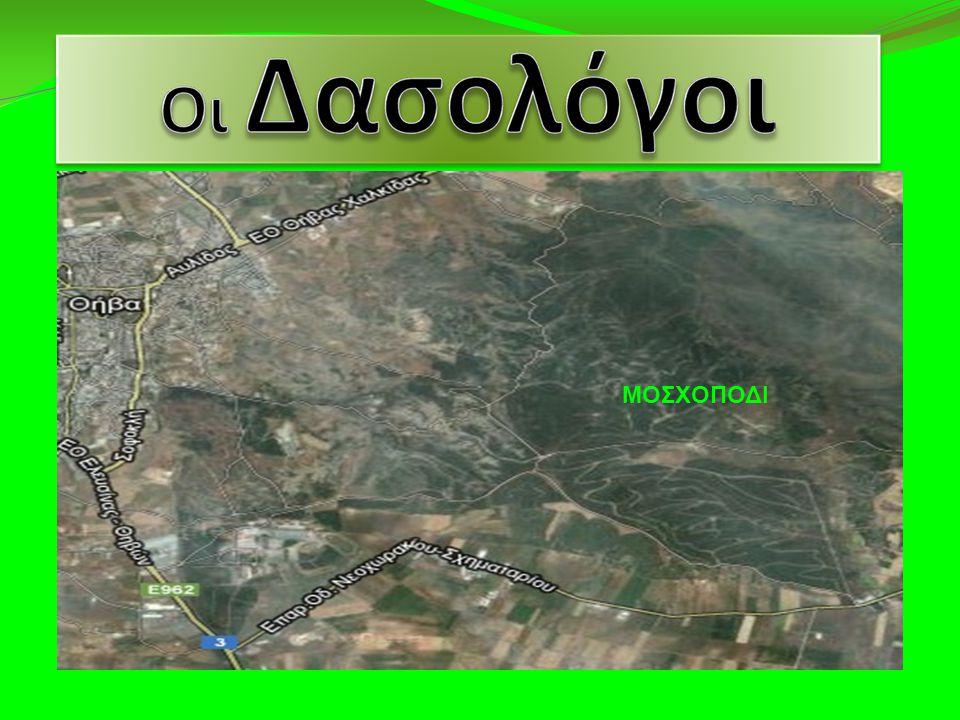 Το δάσος του Μοσχοποδίου έκτασης 20.000 στρεμμάτων, βρίσκεται σε απόσταση αναπνοής από τη πόλη της Θήβας μόλις 2 χλμ. Νοτιοανατολικά και αποτελεί τον