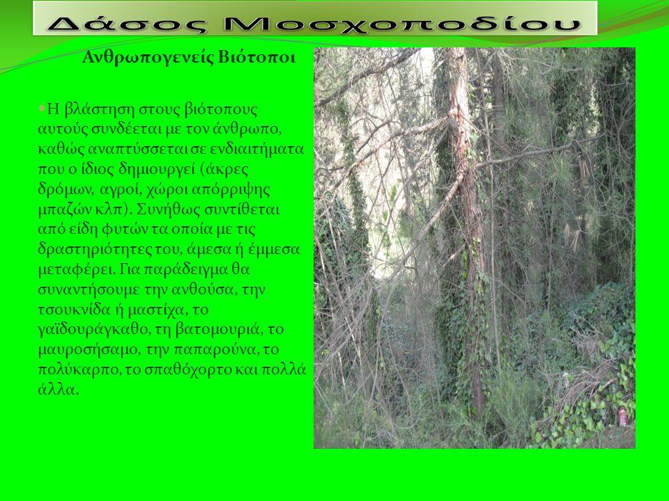 Ανθρωπογενείς Βιότοποι Η βλάστηση στους βιότοπους αυτούς συνδέεται με τον άνθρωπο, καθώς αναπτύσσεται σε ενδιαιτήματα που ο ίδιος δημιουργεί (άκρες δρόμων, αγροί, χώροι απόρριψης μπαζών κλπ).