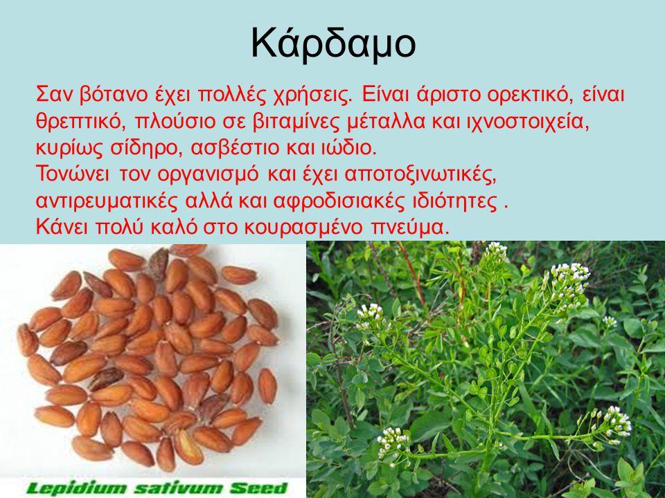 Κάρδαμο Σαν βότανο έχει πολλές χρήσεις. Είναι άριστο ορεκτικό, είναι θρεπτικό, πλούσιο σε βιταμίνες μέταλλα και ιχνοστοιχεία, κυρίως σίδηρο, ασβέστιο