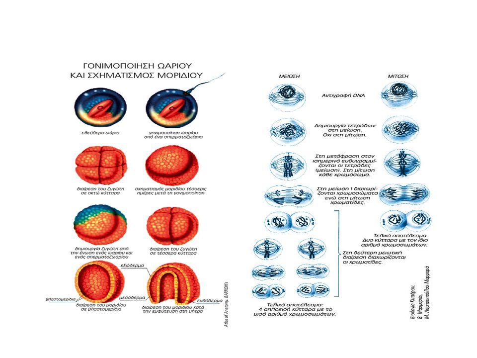 ΕΡΕΥΝΕΣ ΚΛΩΝΟΠΟΙΗΣΗΣ 1885 Ο γερμανός ζωολόγος Αύγουστος Βάισμαν (August Weismann) στην προσπάθειά του να εξηγήσει πώς από το γονιμοποιημένο ωάριο δημιουργείται ένας τέλειος οργανισμός εισηγείται τη θεωρία που θέλει τα κύτταρα να χάνουν γενετική πληροφορία καθώς διαφοροποιούνται.