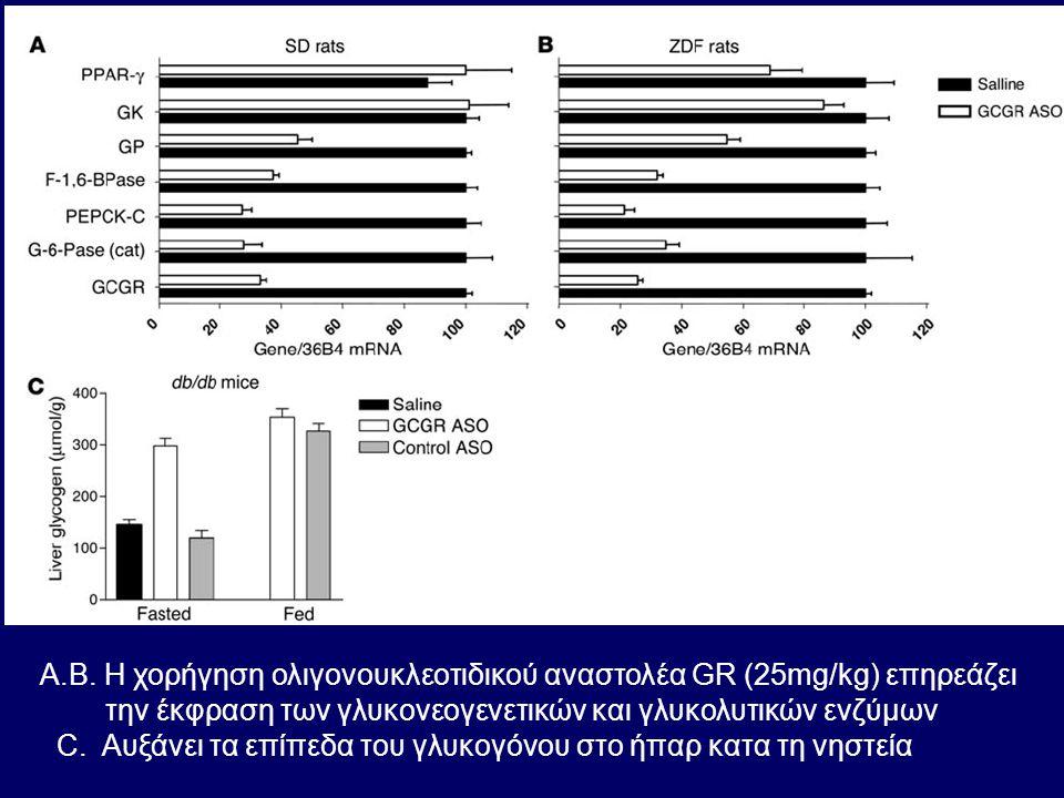 A.B. H χορήγηση ολιγονουκλεοτιδικού αναστολέα GR (25mg/kg) επηρεάζει την έκφραση των γλυκονεογενετικών και γλυκολυτικών ενζύμων C. Αυξάνει τα επίπεδα