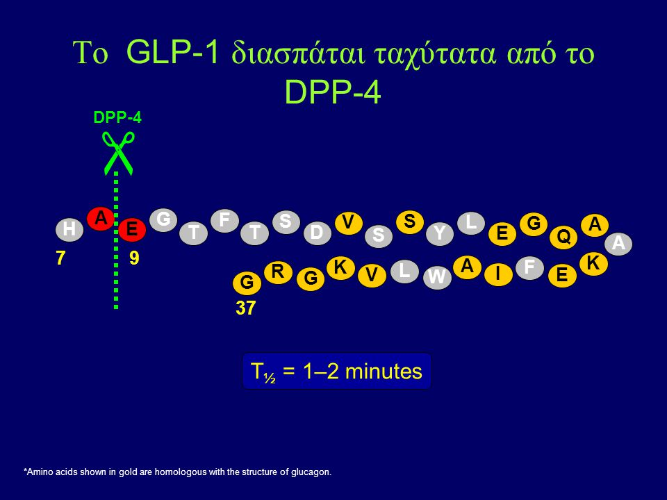 Το GLP-1 διασπάται ταχύτατα από το DPP-4 A E  37 79 DPP-4 H T F T S D V S S Y L E G Q A A K E F I A W L V K G R G G T ½ = 1–2 minutes *Amino acids shown in gold are homologous with the structure of glucagon.