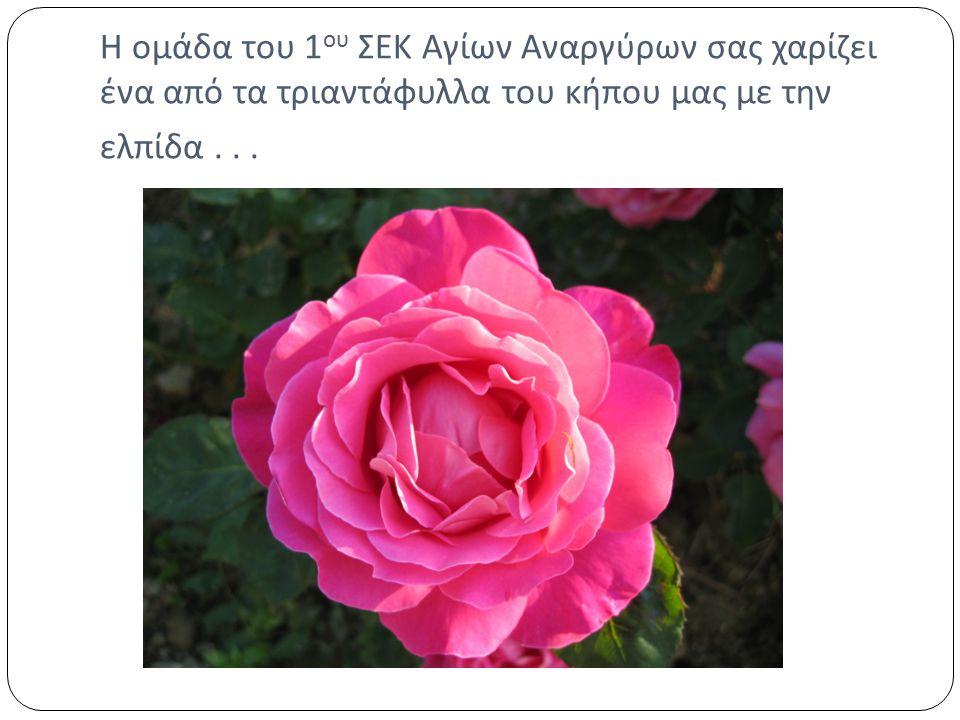 Η ομάδα του 1 ου ΣΕΚ Αγίων Αναργύρων σας χαρίζει ένα από τα τριαντάφυλλα του κήπου μας με την ελπίδα...