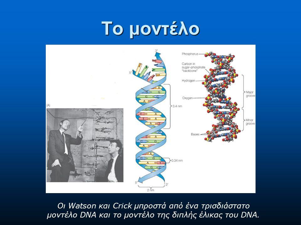 Το μοντέλο Οι Watson και Crick μπροστά από ένα τρισδιάστατο μοντέλο DNA και το μοντέλο της διπλής έλικας του DNA.