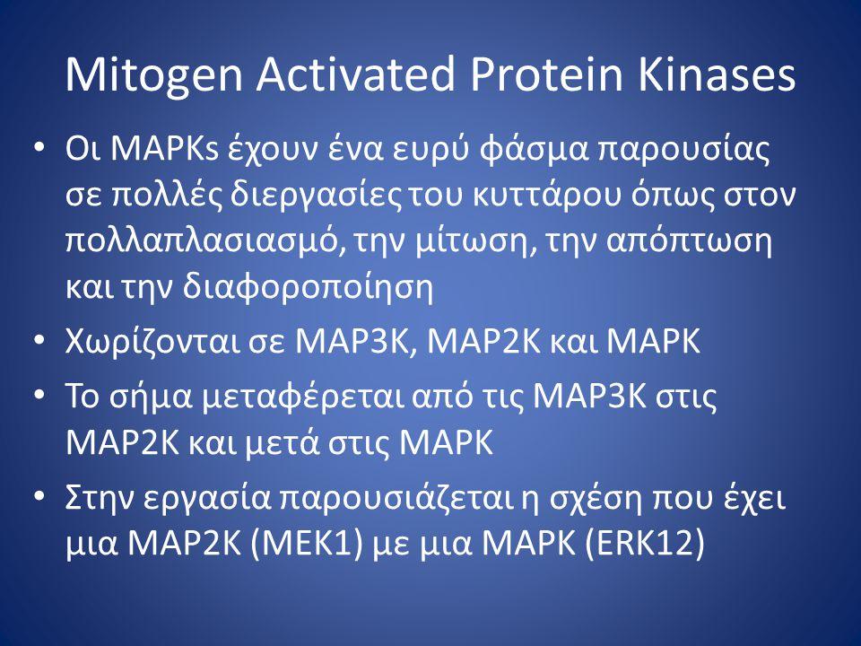 Mitogen Activated Protein Kinases Οι MAPKs έχουν ένα ευρύ φάσμα παρουσίας σε πολλές διεργασίες του κυττάρου όπως στον πολλαπλασιασμό, την μίτωση, την απόπτωση και την διαφοροποίηση Χωρίζονται σε ΜΑΡ3Κ, ΜΑΡ2Κ και ΜΑΡΚ Το σήμα μεταφέρεται από τις ΜΑΡ3Κ στις ΜΑΡ2Κ και μετά στις ΜΑΡΚ Στην εργασία παρουσιάζεται η σχέση που έχει μια ΜΑΡ2Κ (ΜΕΚ1) με μια ΜΑΡΚ (ΕRΚ12)