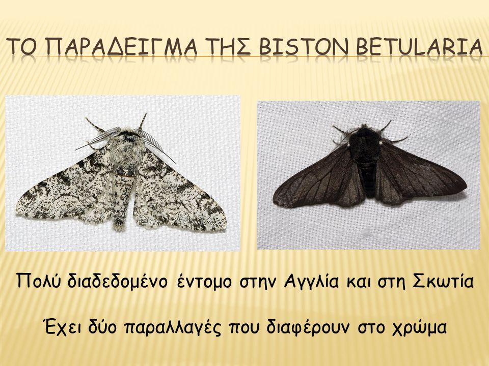 Πολύ διαδεδομένο έντομο στην Αγγλία και στη Σκωτία Έχει δύο παραλλαγές που διαφέρουν στο χρώμα