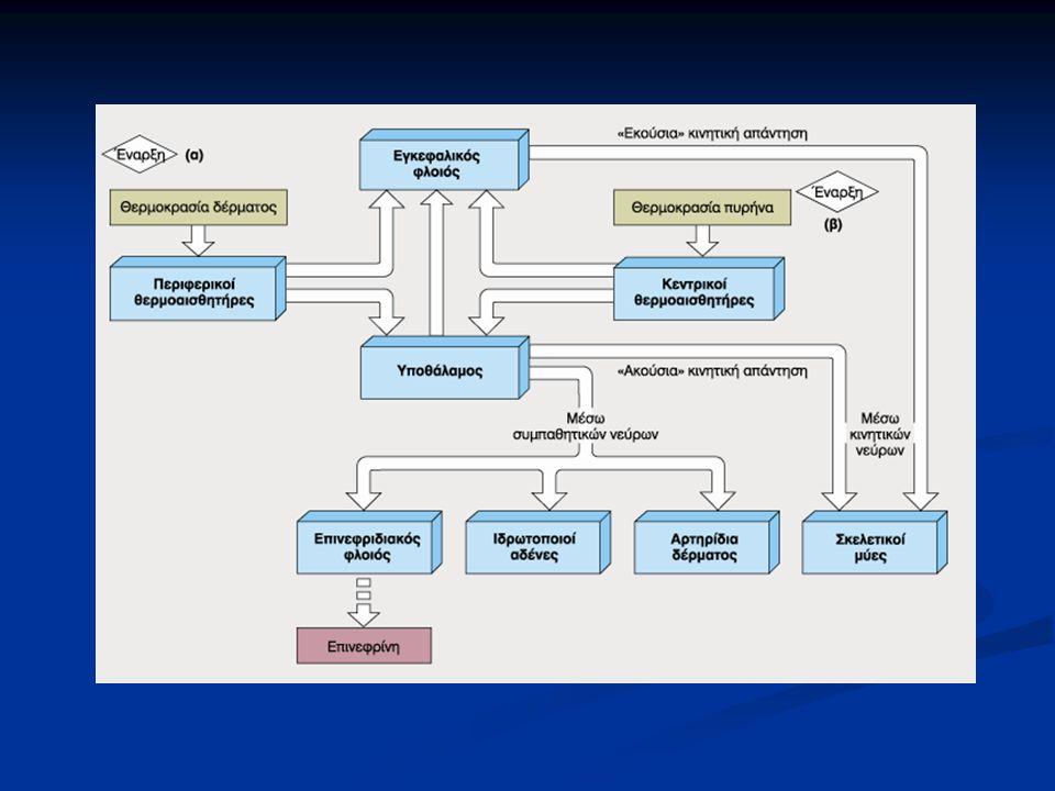 Αρχική αντίδραση του οργανισμού στο κρύο αποτελεί η προοδευτική αύξηση του μυϊκού τόνου.
