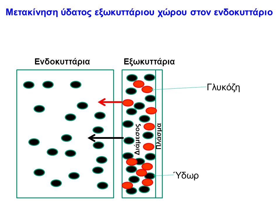 Μετακίνηση ύδατος εξωκυττάριου χώρου στον ενδοκυττάριο ΕνδοκυττάριαΕξωκυττάρια Διάμεσος Πλάσμα Γλυκόζη Ύδωρ