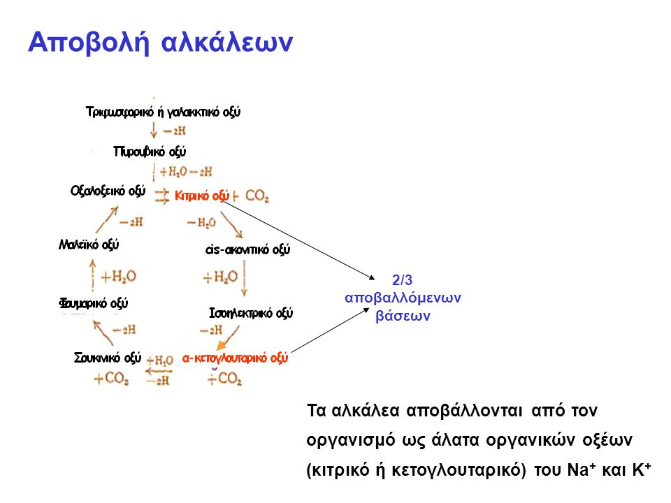 Αποβολή αλκάλεων 2/3 αποβαλλόμενων βάσεων Τα αλκάλεα αποβάλλονται από τον οργανισμό ως άλατα οργανικών οξέων (κιτρικό ή κετογλουταρικό) του Na + και Κ +
