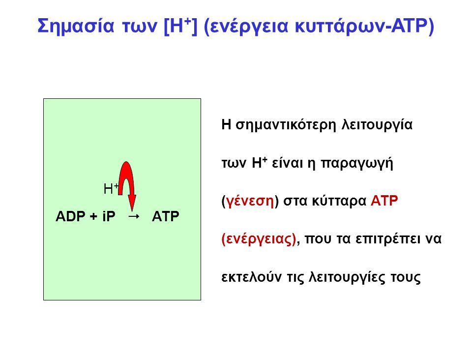 Σημασία των [Η + ] (ενέργεια κυττάρων-ATP) ADP + iP  ATP H+H+ Η σημαντικότερη λειτουργία των Η + είναι η παραγωγή (γένεση) στα κύτταρα ATP (ενέργειας), που τα επιτρέπει να εκτελούν τις λειτουργίες τους