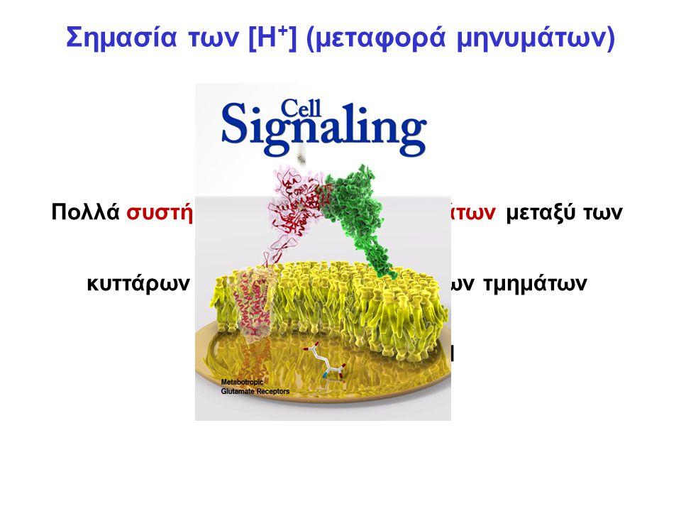 Σημασία των [Η + ] (μεταφορά μηνυμάτων) Πολλά συστήματα μεταφοράς μηνυμάτων μεταξύ των κυττάρων και μεταξύ ενδοκυττάριων τμημάτων εξαρτώνται από το pH