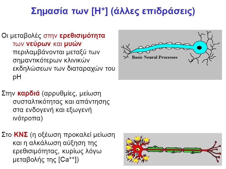 Σημασία των [Η + ] (άλλες επιδράσεις) Οι μεταβολές στην ερεθισιμότητα των νεύρων και μυών περιλαμβάνονται μεταξύ των σημαντικότερων κλινικών εκδηλώσεων των διαταραχών του pH Στην καρδιά (αρρυθμίες, μείωση συσταλτικότητας και απάντησης στα ενδογενή και εξωγενή ινότροπα) Στο ΚΝΣ (η οξέωση προκαλεί μείωση και η αλκάλωση αύξηση της ερεθισιμότητας, κυρίως λόγω μεταβολής της [Ca ++ ])