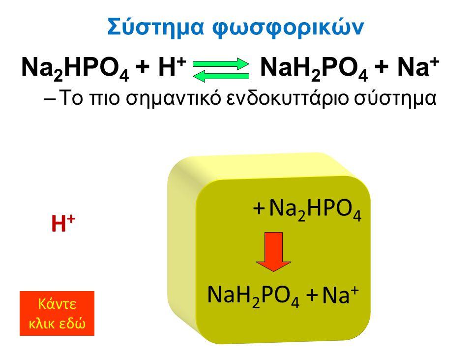 Na 2 HPO 4 + H + NaH 2 PO 4 + Na + –Το πιο σημαντικό ενδοκυττάριο σύστημα Σύστημα φωσφορικών H+H+ Na 2 HPO 4 + NaH 2 PO 4 Κάντε κλικ εδώ Na + +