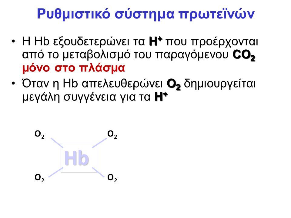H + CO 2Η Hb εξουδετερώνει τα H + που προέρχονται από το μεταβολισμό του παραγόμενου CO 2 μόνο στο πλάσμα O 2 H +Όταν η Hb απελευθερώνει O 2 δημιουργείται μεγάλη συγγένεια για τα H + Hb O2O2 O2O2 O2O2 O2O2 H+H+ Ρυθμιστικό σύστημα πρωτεϊνών