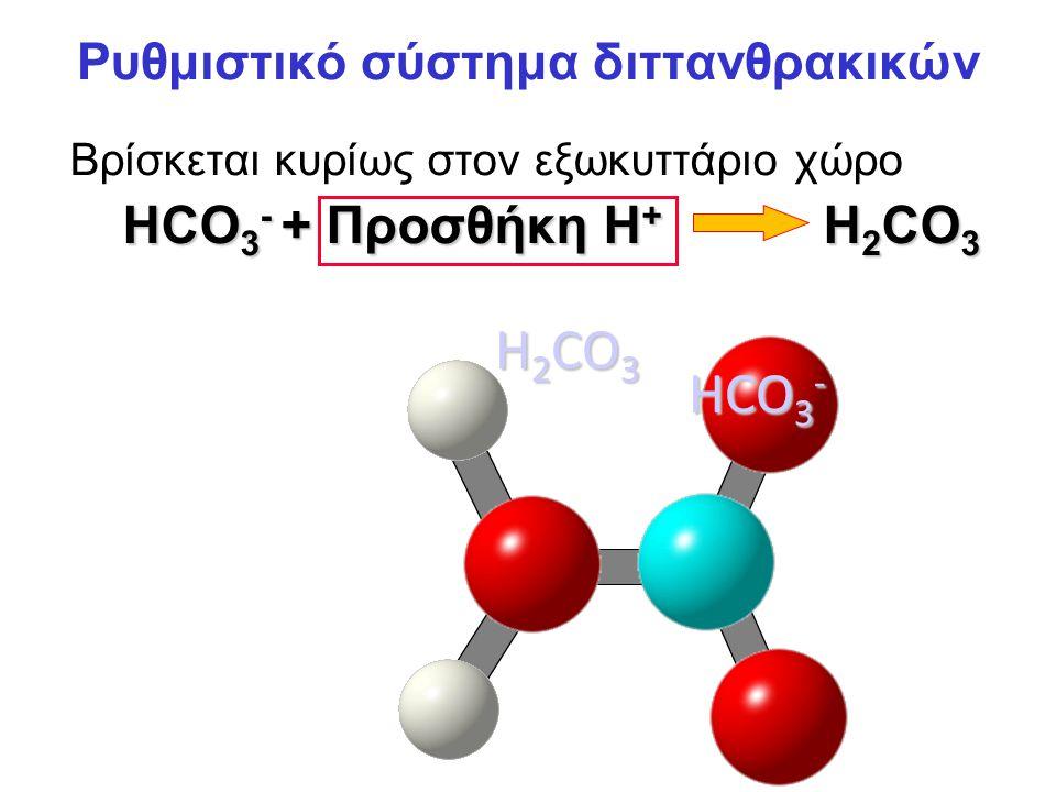 Ρυθμιστικό σύστημα διττανθρακικών Βρίσκεται κυρίως στον εξωκυττάριο χώρο HCO 3 - + Προσθήκη H + H 2 CO 3 H+H+ HCO 3 - H 2 CO 3