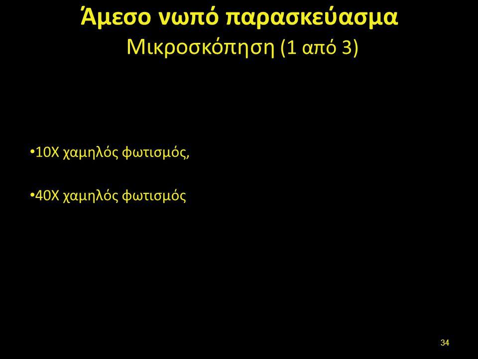 Άμεσο νωπό παρασκεύασμα Μικροσκόπηση (1 από 3) 10Χ χαμηλός φωτισμός, 40Χ χαμηλός φωτισμός 34