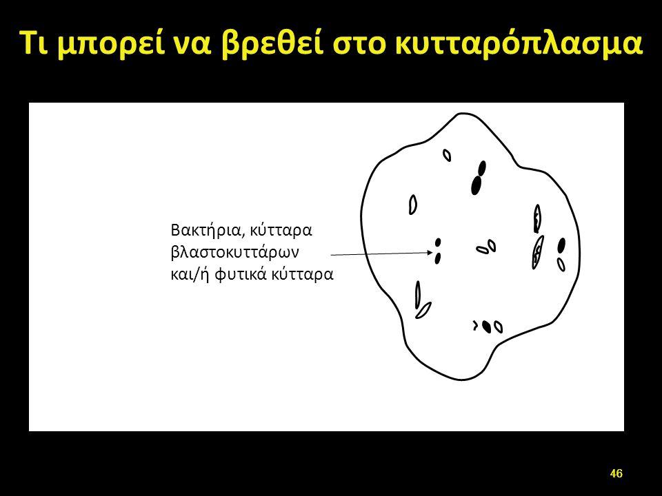 Τι μπορεί να βρεθεί στο κυτταρόπλασμα Βακτήρια, κύτταρα βλαστοκυττάρων και/ή φυτικά κύτταρα 46