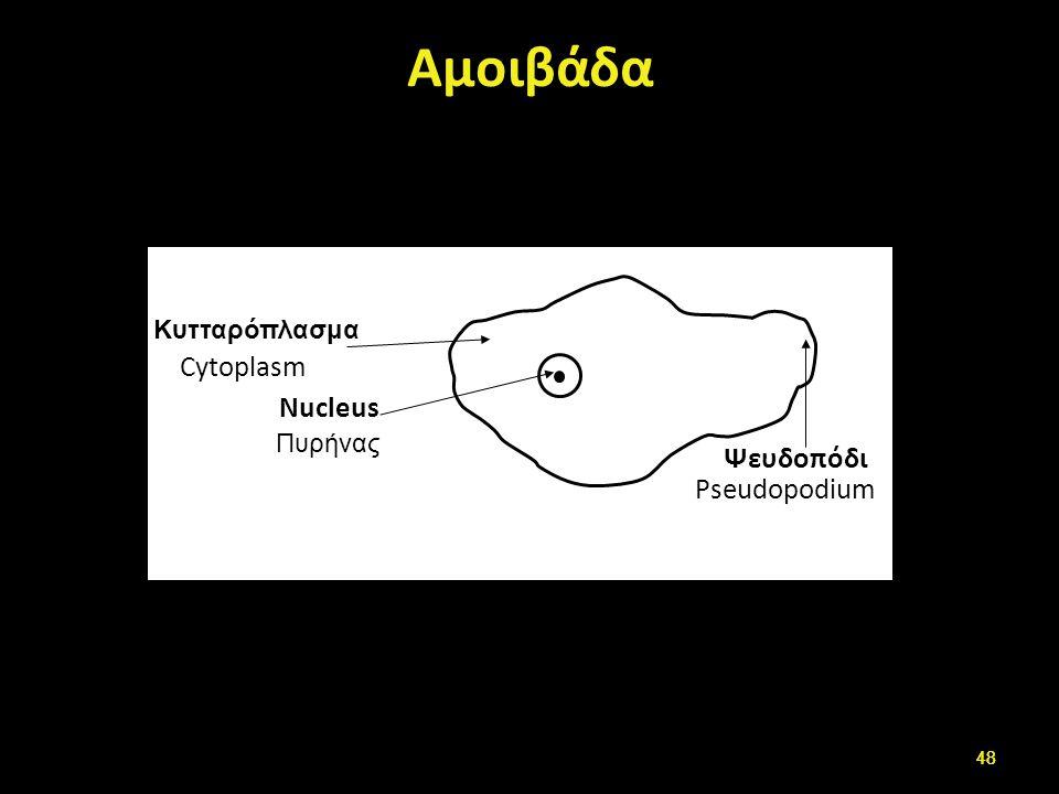 Αμοιβάδα Cytoplasm Nucleus Pseudopodium Κυτταρόπλασμα Πυρήνας Ψευδοπόδι 48