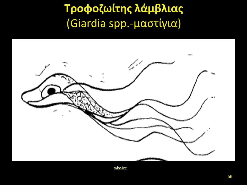 Τροφοζωίτης λάμβλιας (Giardia spp.-μαστίγια) who.int 56