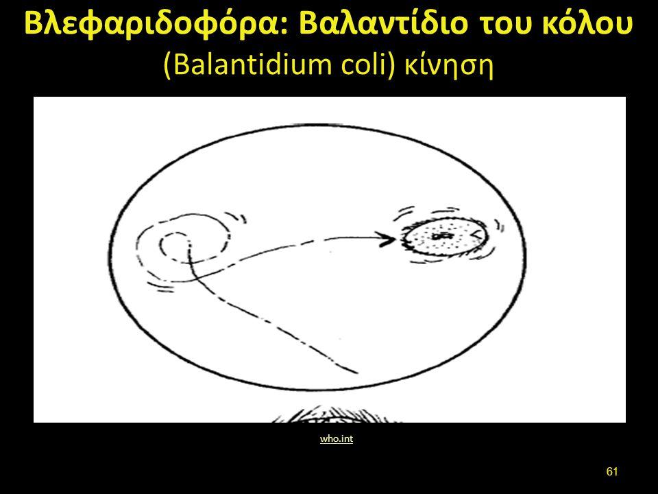 Βλεφαριδοφόρα: Βαλαντίδιο του κόλου (Balantidium coli) κίνηση who.int 61