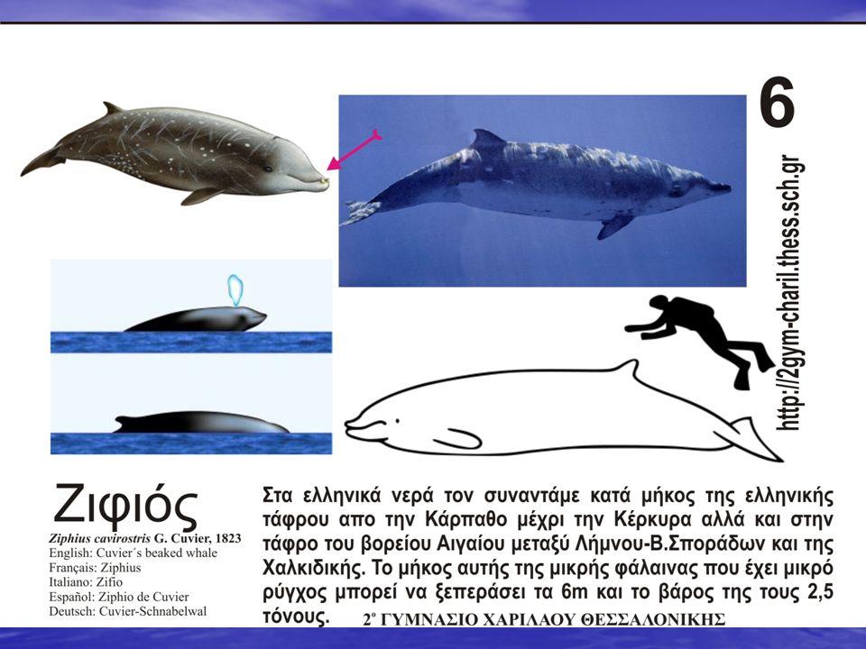 Οι φάλαινες στα πελάγη μας Πέντε (5) είδη φαλαινών συχνάζουν ή βρίσκονται περιστασιακά στα πελάγη μας