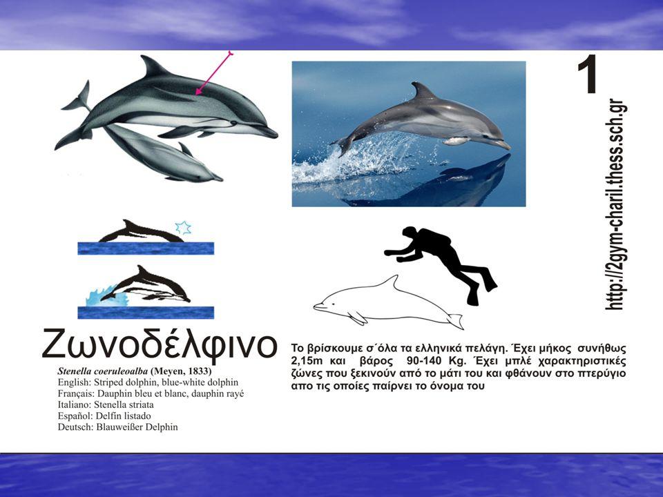 Τα δελφίνια στα ελληνικά πελάγη Τέσσερα είδη δελφινιών κολυμπούν στα νερά μας Τέσσερα είδη δελφινιών κολυμπούν στα νερά μας