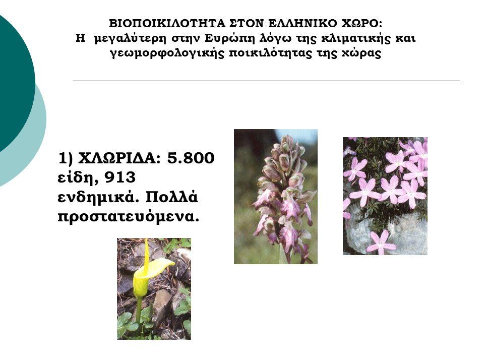 ΒΙΟΠΟΙΚΙΛΟΤΗΤΑ ΣΤΟΝ ΕΛΛΗΝΙΚΟ ΧΩΡΟ: Η μεγαλύτερη στην Ευρώπη λόγω της κλιματικής και γεωμορφολογικής ποικιλότητας της χώρας 1) ΧΛΩΡΙΔΑ: 5.800 είδη, 913