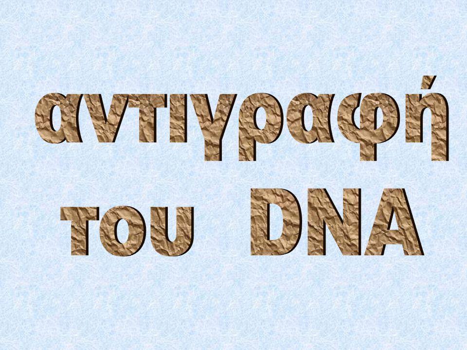  Η DNA δεσμάση: ενώνει τα κομμάτια της ασυνεχούς αλυσίδας ενώνει τα τμήματα των θυγατρικών αλυσίδων στις διάφορες Θ.Ε.Α.