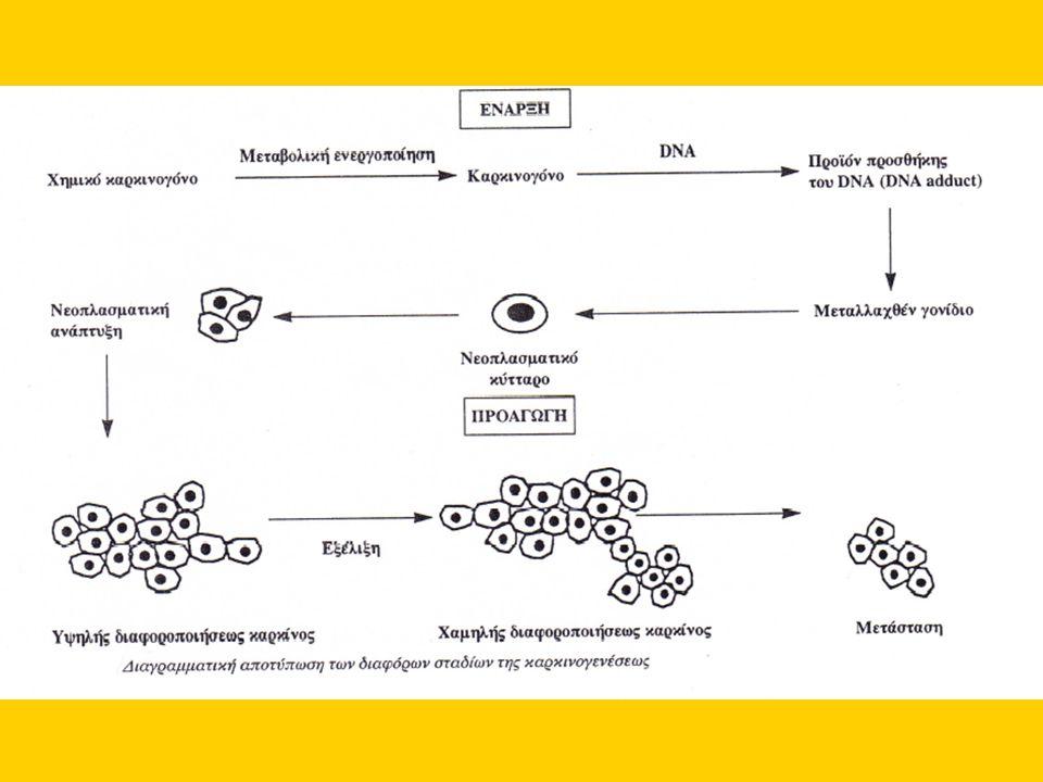 Συν-καρκινογόνα Συν-καρκινογόνα (co-carcinogens) ονομάζονται οι ουσίες εκείνες που επάγουν την καρκινογόνο δράση ενός γονιδιοτοξικού καρκινογόνου, όταν χορηγούνται πριν ή συγχρόνως με αυτό ή όσο διαρκεί η βλάβη του DNA.
