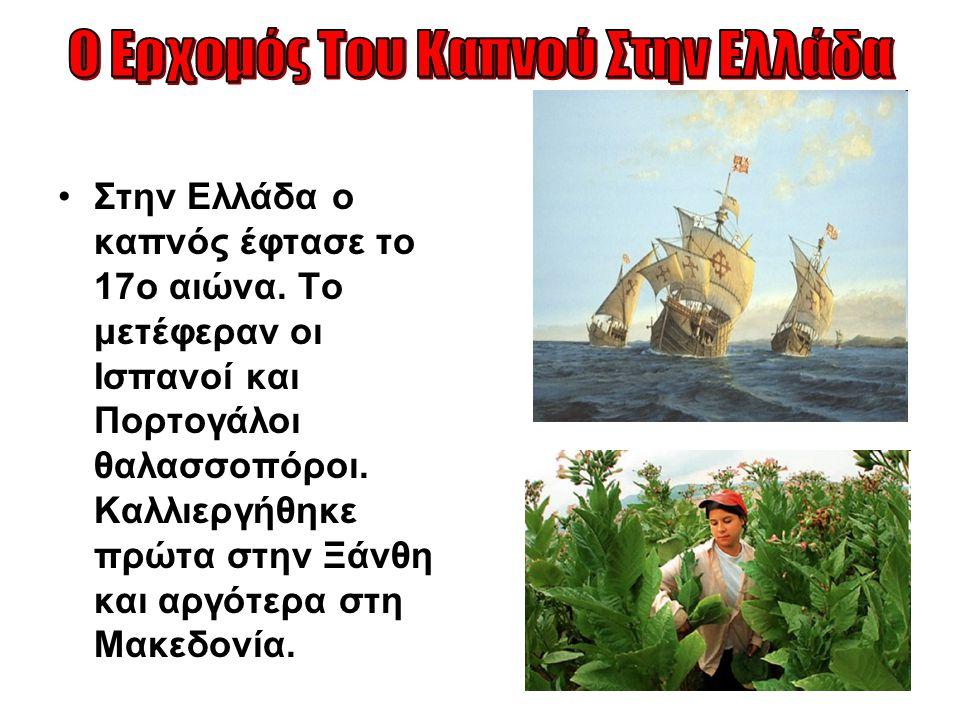 Στην Ελλάδα ο καπνός έφτασε το 17ο αιώνα. Το μετέφεραν οι Ισπανοί και Πορτογάλοι θαλασσοπόροι. Καλλιεργήθηκε πρώτα στην Ξάνθη και αργότερα στη Μακεδον