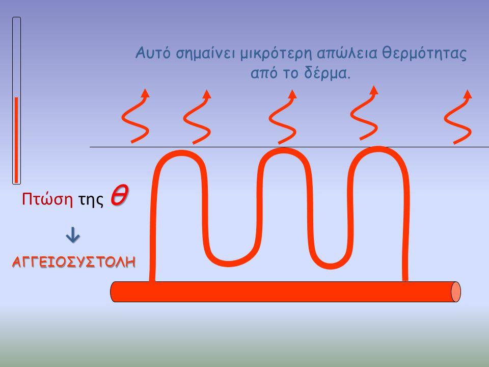 θ Πτώση της θ↓ΑΓΓΕΙΟΣΥΣΤΟΛΗ Αυτό σημαίνει μικρότερη απώλεια θερμότητας από το δέρμα.