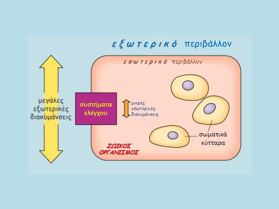 σωματικά κύτταρα ΖΩΙΚΟΣ ΟΡΓΑΝΙΣΜΟΣ μικρές εσωτερικές διακυμάνσεις συστήματα ελέγχου μεγάλες εξωτερικές διακυμάνσεις ε σ ω τ ε ρ ι κ ό ε σ ω τ ε ρ ι κ ό περιβάλλον ε ξ ω τ ε ρ ι κ ό ε ξ ω τ ε ρ ι κ ό περιβάλλον