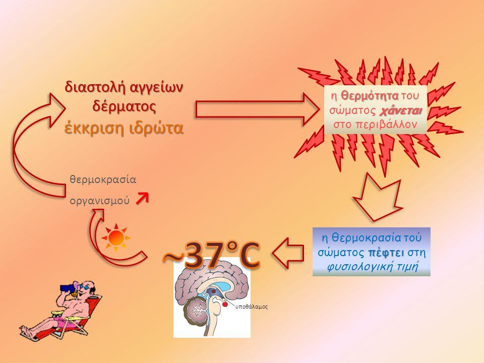 ↗ θερμοκρασία οργανισμού ↗ διαστολή αγγείων δέρματος έκκριση ιδρώτα πέφτει η θερμοκρασία τού σώματος πέφτει στη φυσιολογική τιμή θερμότητα χάνεται η θερμότητα του σώματος χάνεται στο περιβάλλον υποθάλαμος