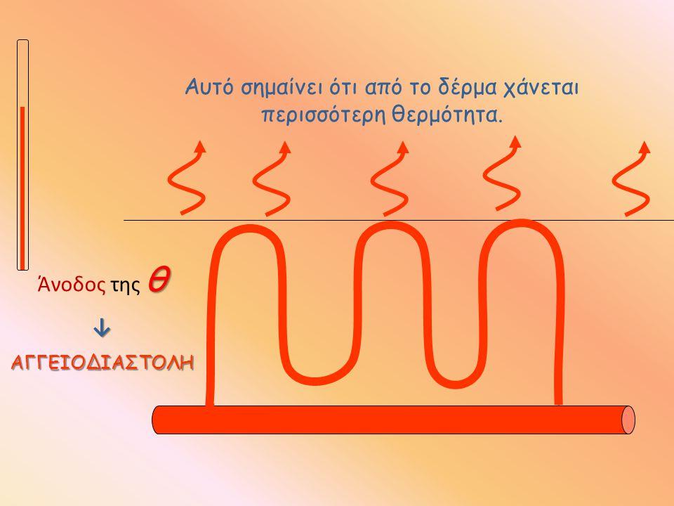 θ Άνοδος της θ↓ΑΓΓΕΙΟΔΙΑΣΤΟΛΗ Αυτό σημαίνει ότι από το δέρμα χάνεται περισσότερη θερμότητα.