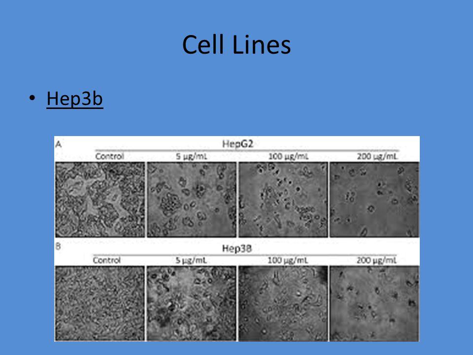 Cell Lines Hepg2 Πρόκειται για ηπατικά κύτταρα ανθρώπων γένους αρσενικού.