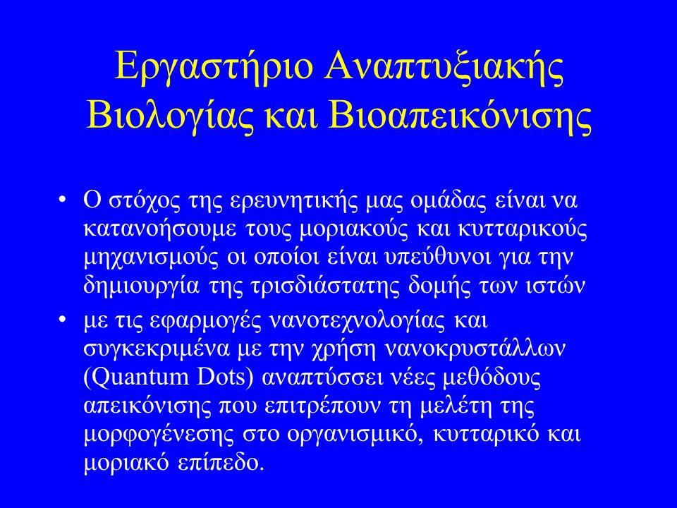 Εργαστήριο Αναπτυξιακής Βιολογίας και Βιοαπεικόνισης Ο στόχος της ερευνητικής μας ομάδας είναι να κατανοήσουμε τους μοριακούς και κυτταρικούς μηχανισμ